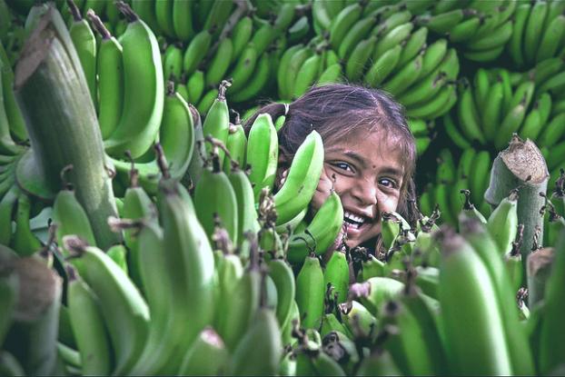 Bananer försörjer miljontals människor världen över. Foto: Ram Reddy